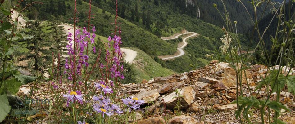 Kathmandu Flora & fauna