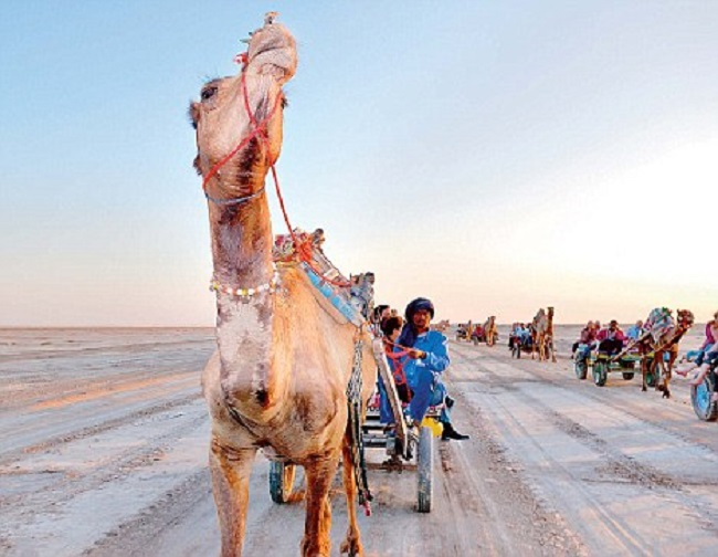 Camel safari at Rann of Kutch, Gujarat