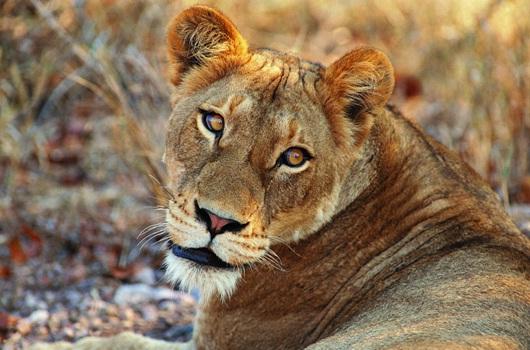Ranthambore_National_Park