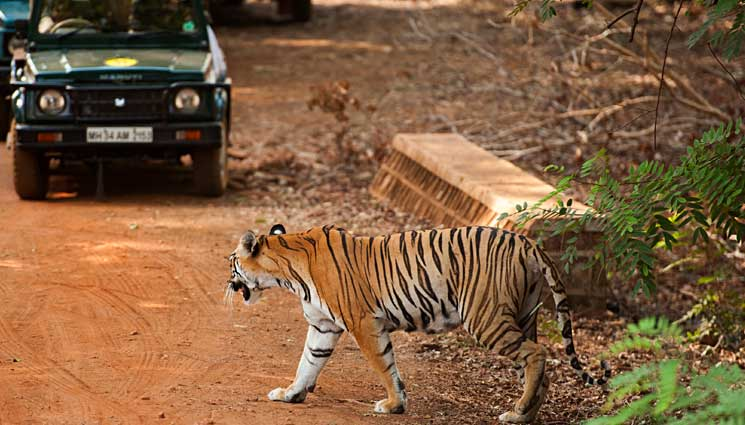Tadoba National Park Sightseeing