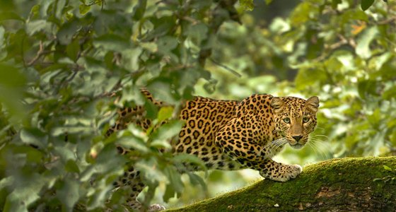 Tadoba National Park