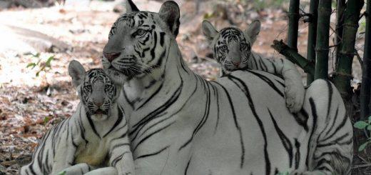 Anna Zoological Park