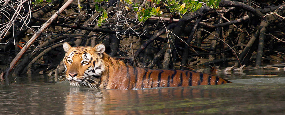 Sundarbans National Park, West Bengal