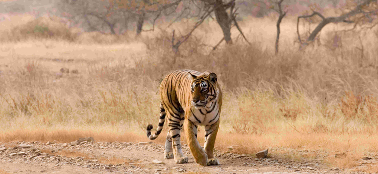 Top 10 Famous Tiger Reserves in India