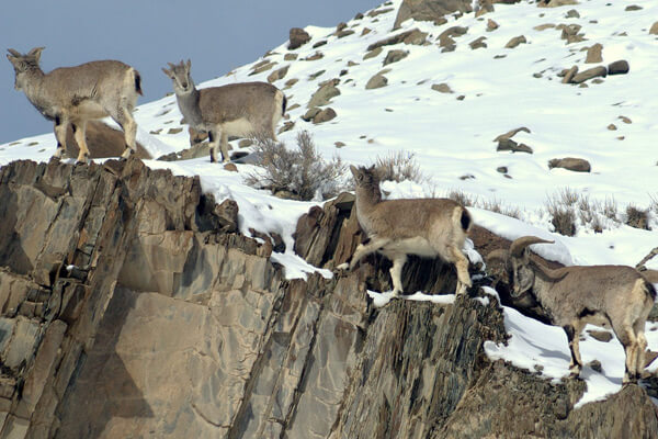 wildlife destinations in Ladakh