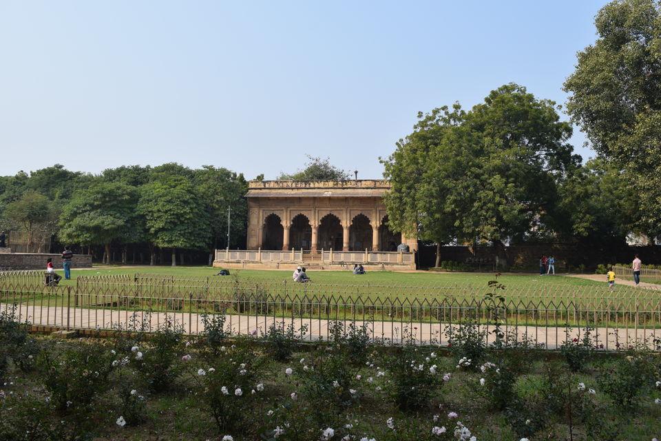 Tamarind Tree inside the Gwalior Fort