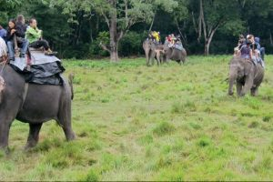 elephant safari corbett