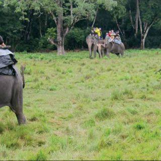 elephant safari corbett