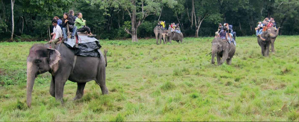elephant experience in India