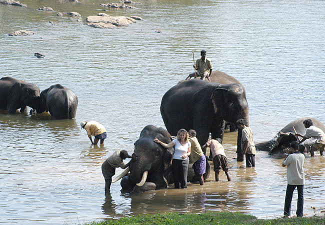 Elephant camps in India