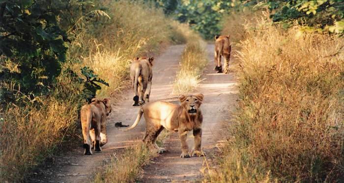 Kutch desert wildlife sanctuary