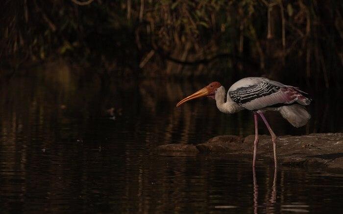Ranganthittu bird sanctuary, Karnataka