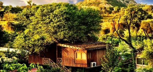 Tree House resort, Jaipur