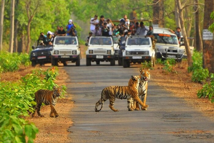 Jeep safari in Sariska Tiger Reserve
