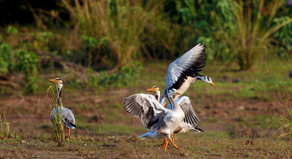 birdwatching at pench national park