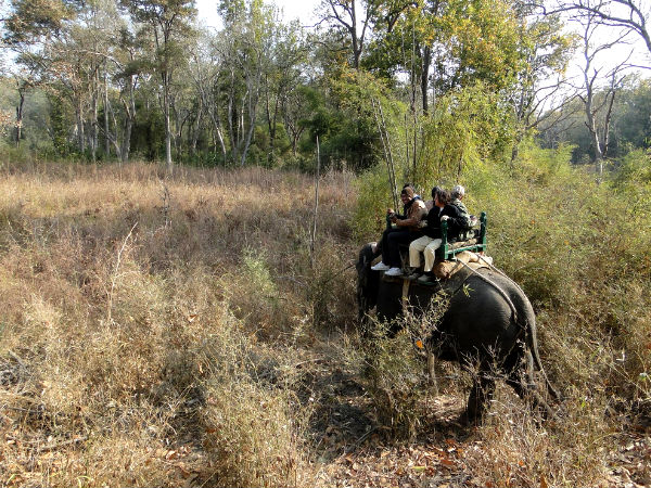 elephant safari in pench national park