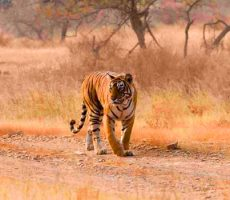 Ranthambhore Tour from Delhi