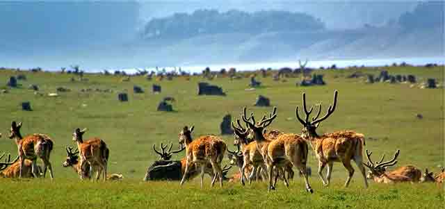 Corbett National Park, India