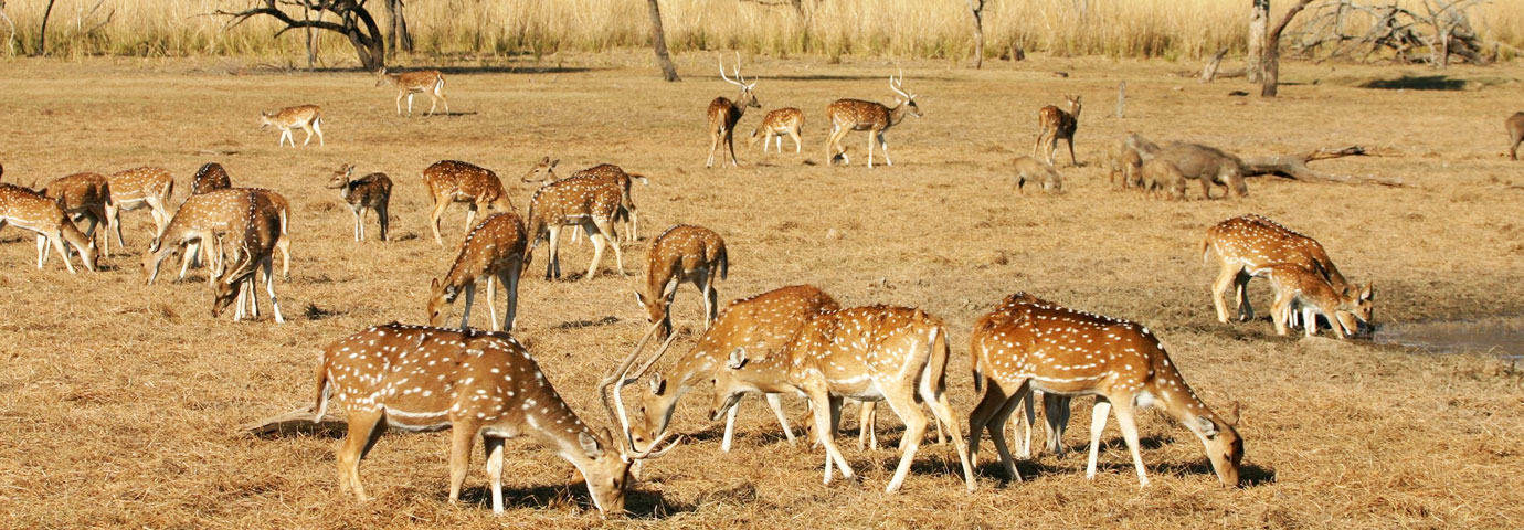 Sariska National Park Alwar