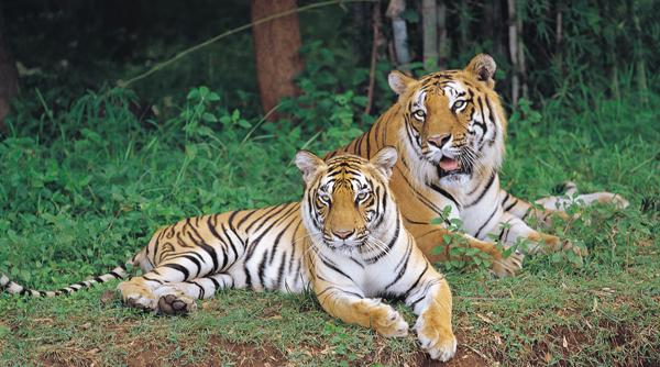 Bannerghatta National Park, Bangalore