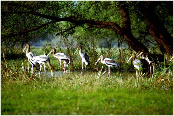 Keoladeo National Park, Rajasthan