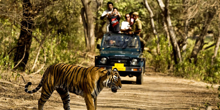 Corbett National Park, Nainital