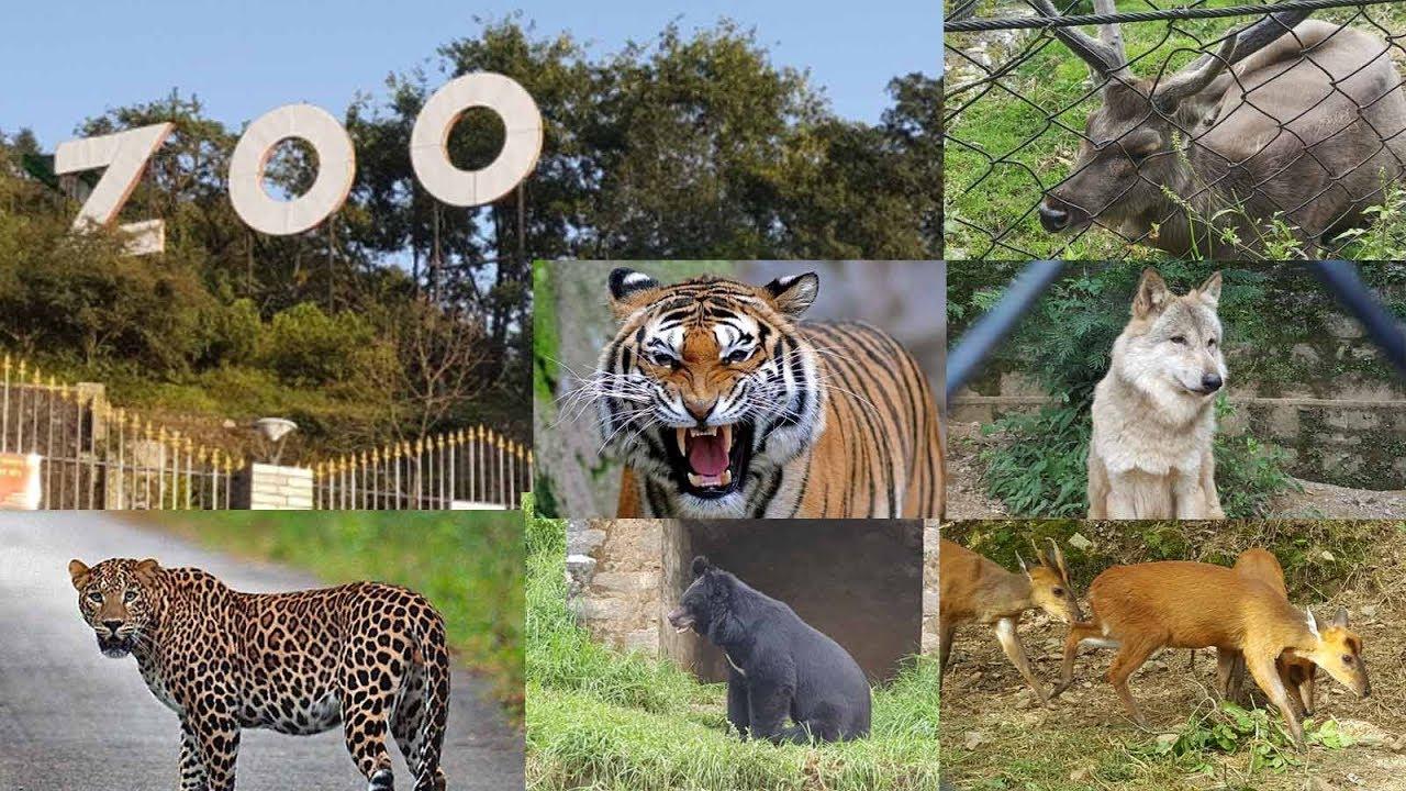 Nainital Zoo, Nainital