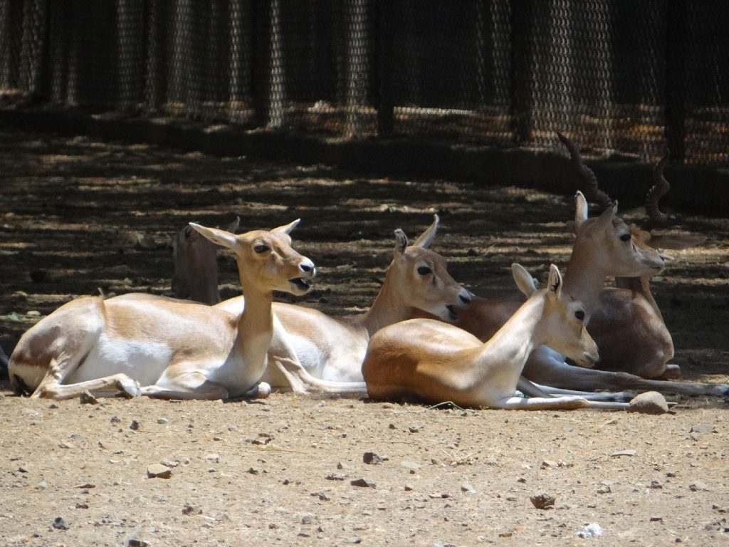 Veermata Jijabai Bhosale Zoo