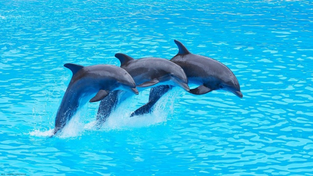 places to spots Dolphins