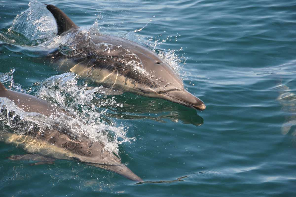 dolphins in kerala