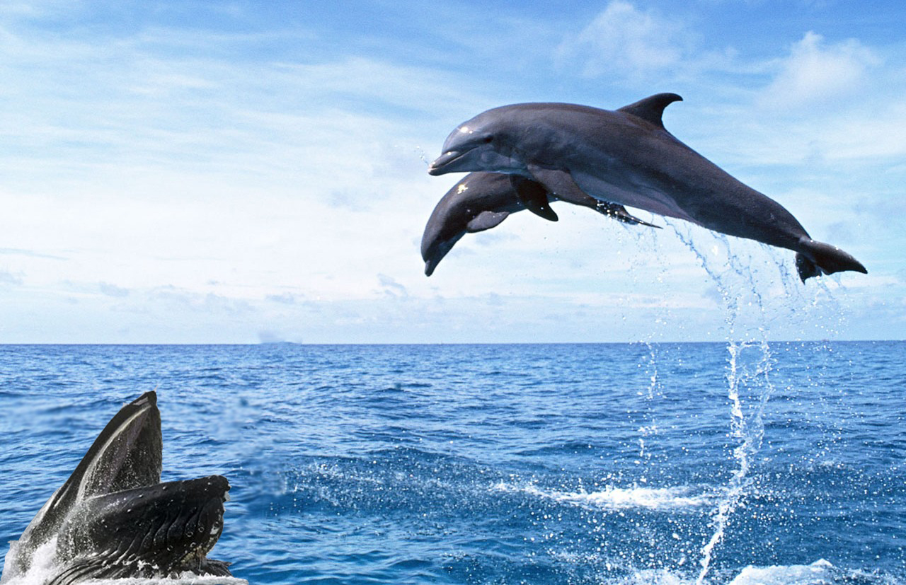 Dolphins in assam