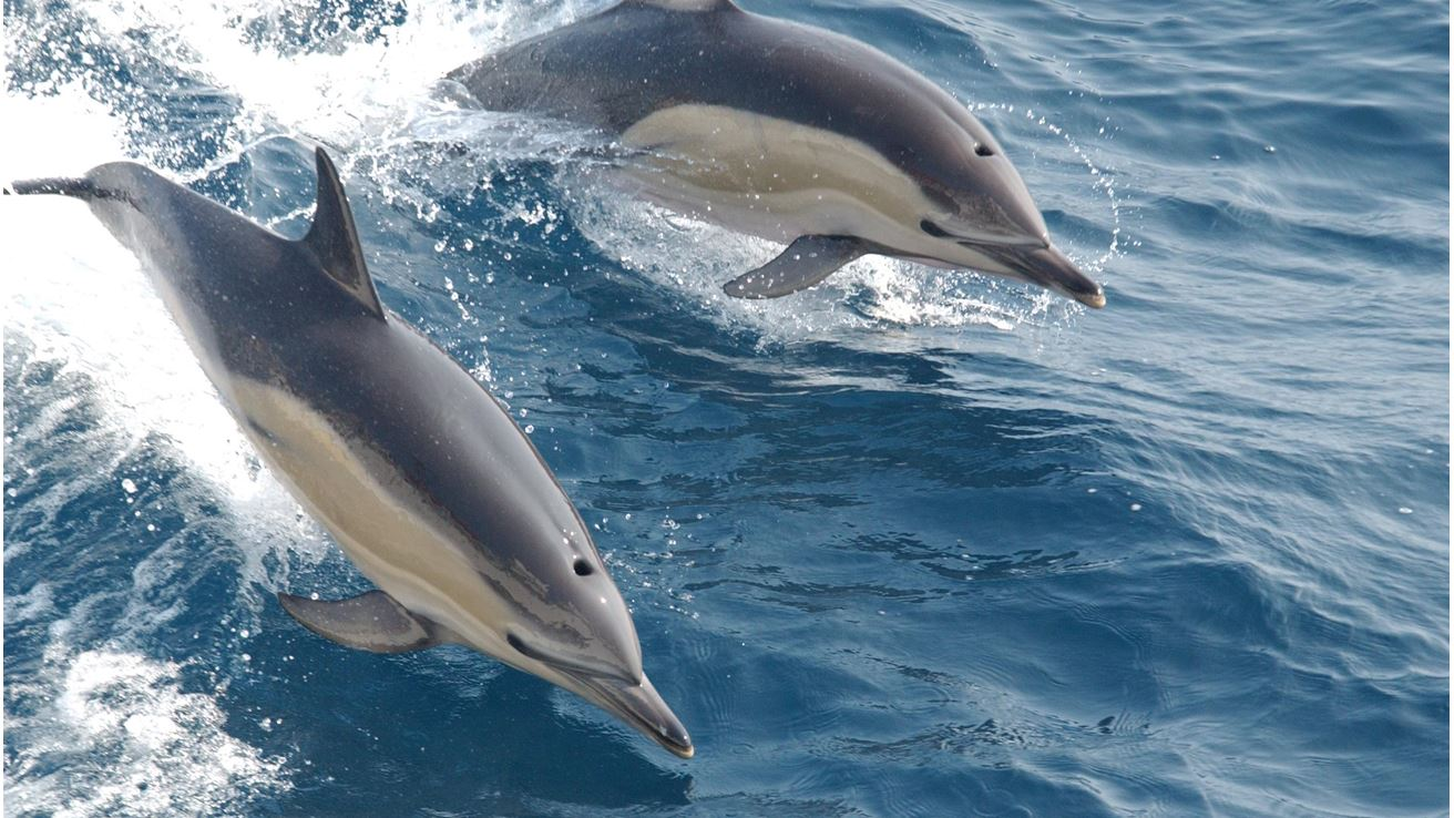 places to spots Dolhins