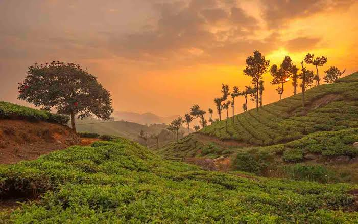 Attractions in Munnar
