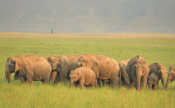 Mumbai To Delhi Wildlife with Rajasthan Special
