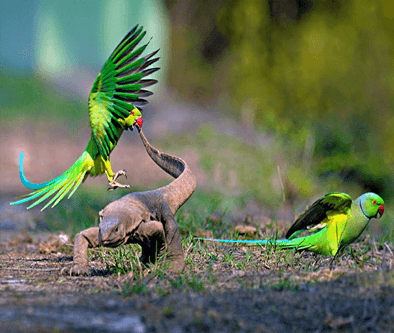 bharatpur bird sanctuary in rajasthan