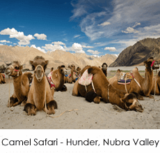 camel-safari-1