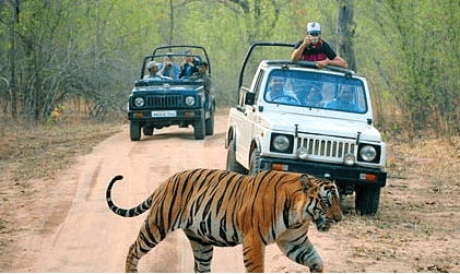 corbett-wildlife-tour