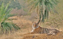 Tiger Reserve in Ranthambore