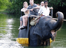 Elephant Ride in Pinnawala in Sri Lanka
