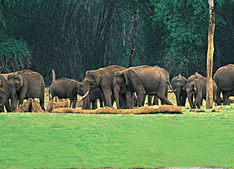 Wildlife Sanctuary Wayanad