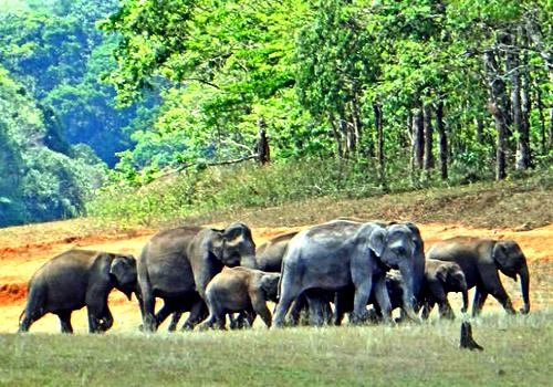 Chinnar Wildlife Sanctuary, Munnar - Idukki