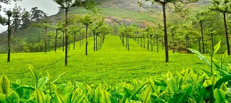 Spice Plantations of Kerala