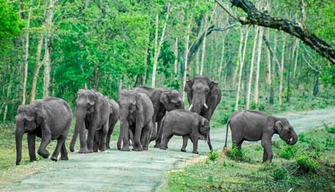 Wildlife Sanctuaries in South India