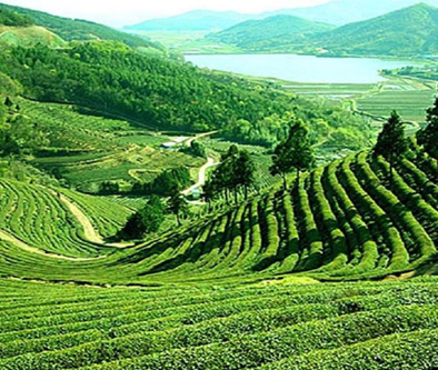 7 days kerala tour including ooty hill stations