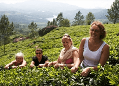 Spice Plantation tour in Kerala