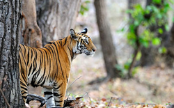 Wildlife Tourism in India