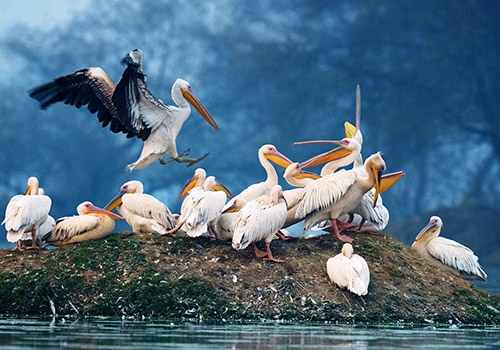 Keoladeo Ghana ( Bharatpur ) National Park