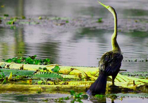 south India wildlife sanctuary